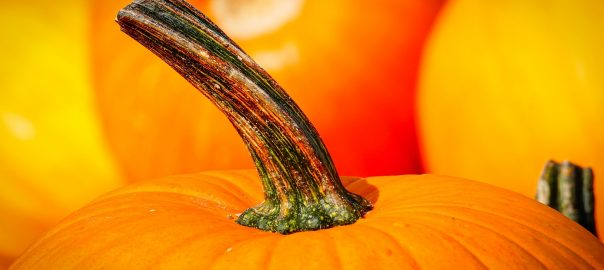 superfood pumpkin