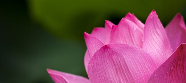 lotus flower - meditation tips